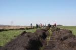 За один день в Канске высадили около 4 тысяч деревьев