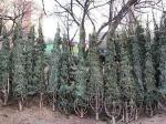 Милиция на охране елок