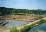 Краевые парламентарии считают, что назаровцы накопили большой опыт по разведению и реализации рыбы