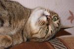 """Назаровские школьники рисовали и фотографировали """"Мартовских котов"""""""