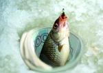 В чем причина рыбацких бунтов?