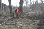 Администрация Ужура предлагает горожанам бесплатные дрова