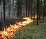 В Боготоле горит лес