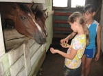Назаровские ребята готовятся к дню рождения конного манежа
