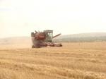 С полей Ачинского района убрана треть урожая