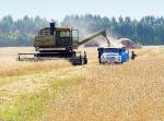 На полях Красноярского края убрано практически половина урожая