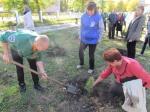 Возле Аллеи шахтерской славы в Назарово посадили 85 саженцев кедра