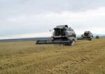 В Ужурском районе соберут более 400 тысяч тонн зерна