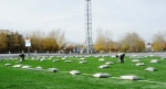 В Ачинске укладывают травяное покрытие на футбольном поле