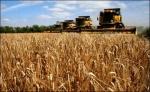 Ачинские сельхозработники - одни из лучших представителей отрасли края
