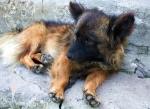 В Ачинске убивают животных на глазах у хозяев
