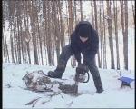 В Ачинске снова воруют деревья