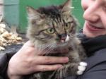 Ачинские защитники животных не дали утопить кошку