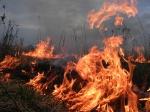 За один день в Ачинске выгорело 30 000 квадратных метров земли