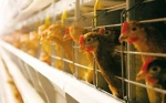 На территории Шарыповского района построят птицефабрику