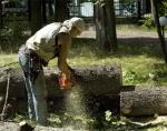 В Назарово период обрезки деревьев завершен