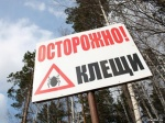 В окрестностях Минусинска активизировались клещи