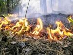 В Канском районе потушили последний лесной пожар