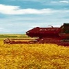 Назаровский район лидирует в развитии сельского хозяйства