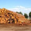 Прокуратура проверяет канские предприятия по отгрузке древесины
