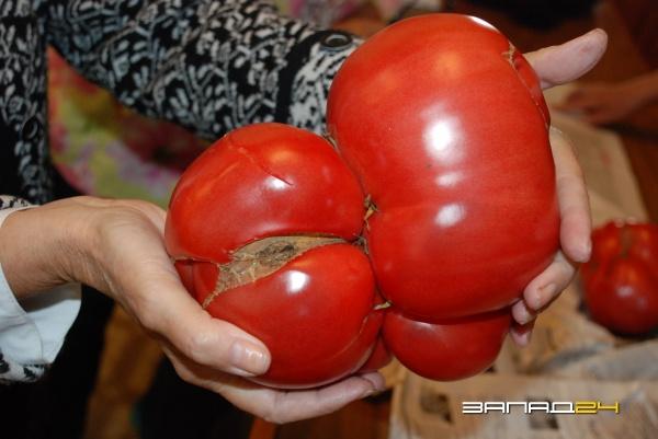 Фото по самые помидоры 21 фотография