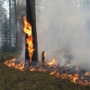 Канцев штрафуют за нарушение противопожарного режима