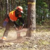 Канский предприниматель заплатил 100 000 рублей за вырубку леса