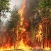 В крае сократилось число лесных пожаров