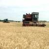 В крае начинается массовая уборка зерновых