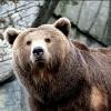 Полицейские Рыбинского района обезвредили медведя