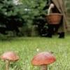 В Минусинске продолжаются поиски грибника из Хакасии
