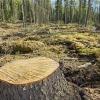 Незаконные вырубки в канском лесничестве составили 16 миллионов рублей
