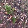В Ачинске восстановят уничтоженную аллею памяти