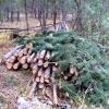 Директора  Минусинского лесничества  подозревают в получении взятки