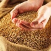 В Минусинском районе сотрудник ГУФСИН подозревается в краже зерна