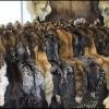 В красноярском заповеднике «Столбы» поймали браконьеров
