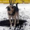 В Ачинске  вышла из- под контроля ситуация с  отловом бездомных собак