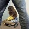 Красноярский суд приговорил педофила к 12 годам колоний