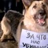 В Минусинске отстреливают собак на глазах у горожан