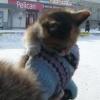 В Минусинске  раздавали шарики и щенков