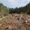 В Лесосибирске вырубили лес на 3 миллиона рублей
