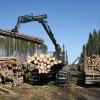 В Красноярском крае почти шестая часть  лесов в аренде