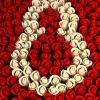 К празднику в Красноярск привезли почти 153 тонны цветов