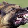 Красноярка через суд получила 10 тысяч за укус собаки