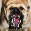 Эвенкийского мальчика загрызли собаки