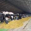 В краевой реестр АПК вступают новые хозяйства
