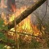 Лесных пожаров в крае не зарегистрировано