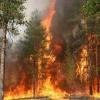 На юге края и в Туве горят леса