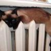 В Ачинске на этой неделе не будет отключения теплоснабжения