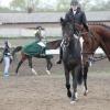 В Красноярске начались соревнования по конному троеборью